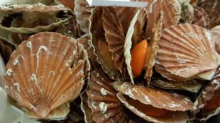 Во Франции не разрешается ловить морских гребешков с 15 мая по 1 октября, в то время как в британском законодательстве такого запрета нет