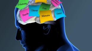 La prothèse neurologique mise au point par les chercheurs de l'université de Californie du Sud enregistre et amplifie la signature des signaux transmis par les neurones correspondant à un souvenir précis.