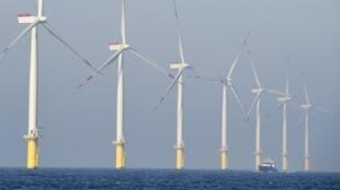 Le balsa est un ingrédient-clé des pales d'éoliennes, sous la couche de résines plastiques.