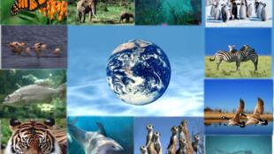L'aventure de la biodiversité.