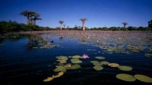 L'île de Madagascar a une biodiversité unique au monde.