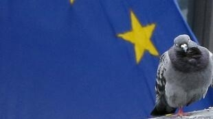 Pigeon of peace - a bird perches in front of the EU flag in Brussels