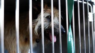 Зоозащитники обвинили власти в истреблении бродячих животных перед чемпионатом мира по футболу