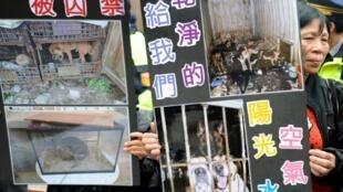 عکس آرشیو - تظاهرات مدافعان و حامیان حیوانات در تایوان در اعتراض به بدرفتاری و آزار حیوانات. ٤ ژانویه ٢٠١٣