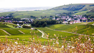 Центральный регион - холмы и виноградники