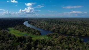 L'Amazonie a perdu 20% de sa surface ces dernières 50 années en raison d'une déforestation massive.