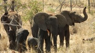 virtual safaris are an opportunity to observe how wildlife behave in the absence of tourists