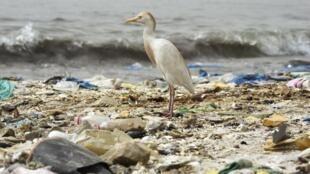 Selon les experts, si la production de plastique ne diminue pas, il pourrait y avoir en 2050 plus de plastique que de poissons dans les océans.