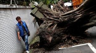 震後台北街頭倒下的樹