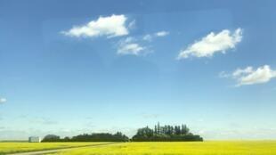 The rolling wheat prairies of Saskatcewan, Canada.
