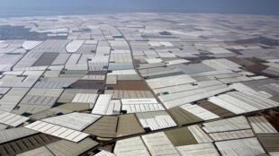 Serres en plastique dans la zone d'El Ejido, sur la côte d'Almeria, au sud de l'Espagne.