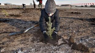 Un écolier danois plante un arbre dans le sol gelé près de Drastrup dans le Jutland, dans l'ouest du Danemark, le 2 décembre 2009 (photo d'illustration).