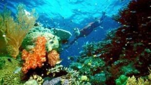 """San hô, """"linh hồn của biển cả"""", đang bị ô nhiễm môi trường và nạn khai thác bừa bãi đe dọa hủy diệt. Trong ảnh, một rạn san hô tại kỳ quan thế giới Biển San Hô, ngoài khơi bang Queensland, Úc."""
