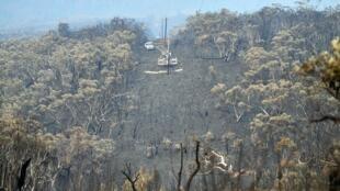 Arbres brûlés après un feu dans le bush, à 120 kilomètres au nord-ouest de Sydney, le 18 décembre 2019.