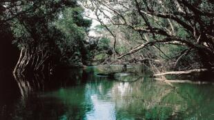 La forêt du bassin du Congo est la plus vaste d'Afrique. (image illustration).