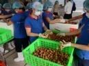 Virus corona - Covid-19: Cơ hội để Việt Nam giảm phụ thuộc thị trường Trung Quốc?