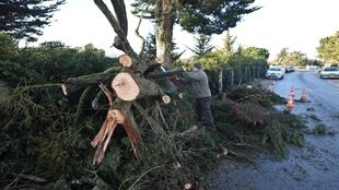 A man cuts the branches of a tree fallen on a road in the village of Angoulins near La Rochelle.
