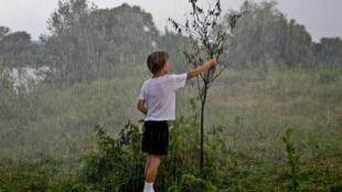 Мальчик и засохшая яблоня, которая расцветает во второй части фильма