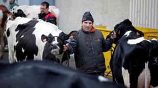 Un éleveur français avec ses vaches à la veille de l'ouverture du 54e Salon de l'agriculture à Paris, le 24 février 2017.