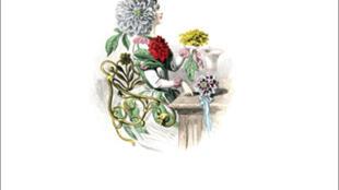 Détail de la couverture du livre de Jacques Tassin, A quoi pensent les plantes ?
