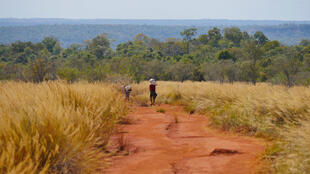 Vue du parc national d'Ankarafantsika, à Madagascar.