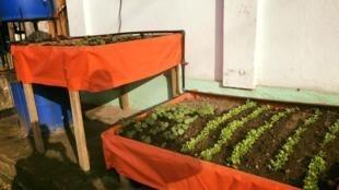 La start-up camerounaise «Save our agriculture» a présenté son système de kit aquaponique urbain économique en eau qui permet de produire des aliments biologiques.