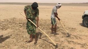 Deux mineurs grattent le sel dans une «sebkha».