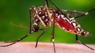 O companheiro da vítima havia contraído o vírus da dengue durante uma viagem para Cuba, onde foi picado por um mosquito.