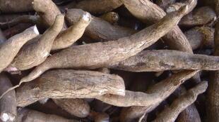 Des racines de manioc. Réduites en semoule, elles deviennent du Gari, qui bénficie du label «indication géographique» dans la région du Savalou (image d'illustration).