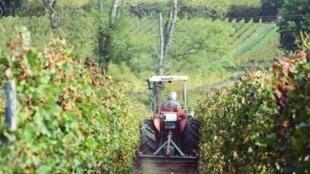 Vinhas do Chateau Fontbaude, que produz o vinho Côtes de Bordeaux Castillon, em 23 de outubro de 2017, em Saint-Magne-de-Castillon, no sudoeste da França.
