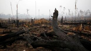 Khu rừng Amazon ở Boca do Acre, bang Amazonas, Brazil, sau khi bị cháy, ngày 24/08/2019