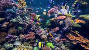 联合国报告呼吁警惕地球上八分之一的物种面临灭绝威胁,2019年5月。