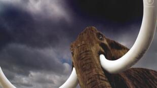 Reconstitution d'un mammouth au Musée de la préhistoire d'Ile-de-France, novembre 2012