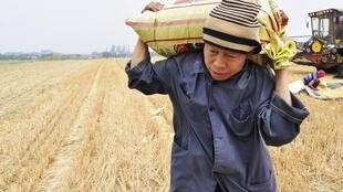 Nhọc nhằn của nông dân Trung Quốc. Ảnh minh họa.