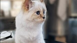 Choupette Lagerfeld: I'm not only beautiful, I'm also very rich.