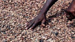 Le Ghana et la Côte d'Ivoire représentent plus de 60 % de la production mondiale de cacao.