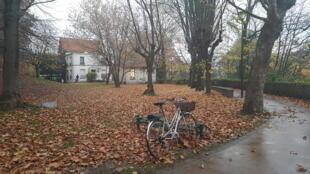 Mùa lá rụng.