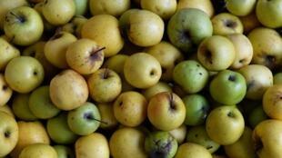 Биологическое сельское хозяйство, в отличие от традиционного, отказывается от химикатов и ГМО