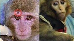 La imagen del mono antes y después del viaje.