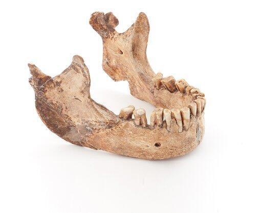 Mandíbula del Hombre de la Ferassie, paleolítico medio.
