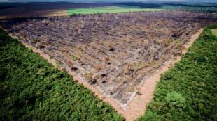 A superfície de sete campos de futebol desaparece da Amazônia a cada segundo, afirma Rostain.