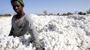 Environ 20 000 tonnes de coton seront traités chaque année dans ce complexe industrielde transformationintégréeducotonau Burkina Faso.