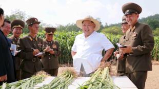 Lãnh đạo Bắc Triều Tiên Kim Jong Un thăm trang trại n° 1116 thuộc đơn vị 810 của Quân Đội Bắc Triều Tiên, ngày 13/08/2015. Ảnh do KCNA công bố.