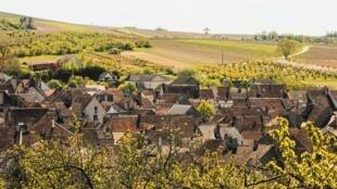 Một ngôi làng trồng nho vùng Bourgogne, Pháp. Ảnh minh họa.
