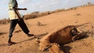 Os terríveis efeitos da seca em Moçambique