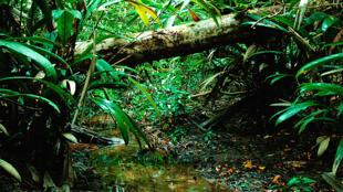 El planeta, en delicado equilibrio ante el avance agroindustrial en el área verde más grande del Mundo.