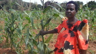 Woman standing with Maize crop in Uganda