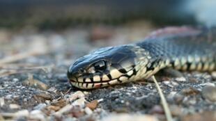 1 million de personnes sont mordues par des serpents chaque année.