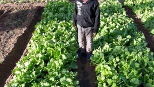 Alex, dans le jardin de son oncle Fouba Zebe à Niamey au Niger.