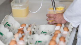 Eggs being analysed in Germany on 4 August